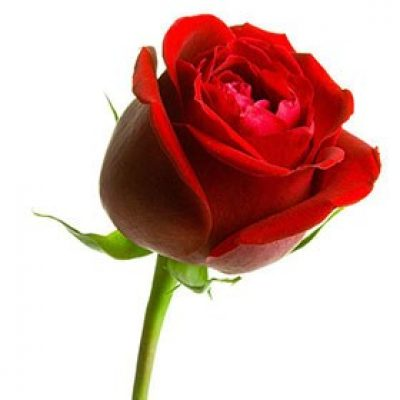 Nacimientos Hoy as flores tienen un color especial, los pájaros cantan más, el sol brilla con una nueva fuerza, y si es de noche las estrellas sonreirán, un nacimiento representa el principio del todo, es el milagro del presente, y la esperanza del futuro. Acontecimiento único para una mujer.